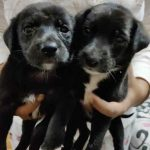 Mumbai Adoption Alert